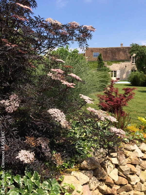 Jardin–et-Sureau-en-fleur-Visuel-Le-Jardin-Spa-Clemence-LE-SOLLIEC-ecrit