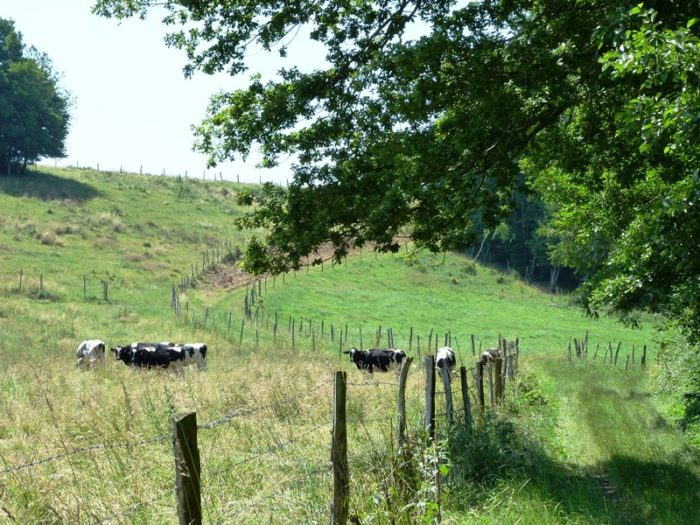 Sentier des Moulins de la Cléry